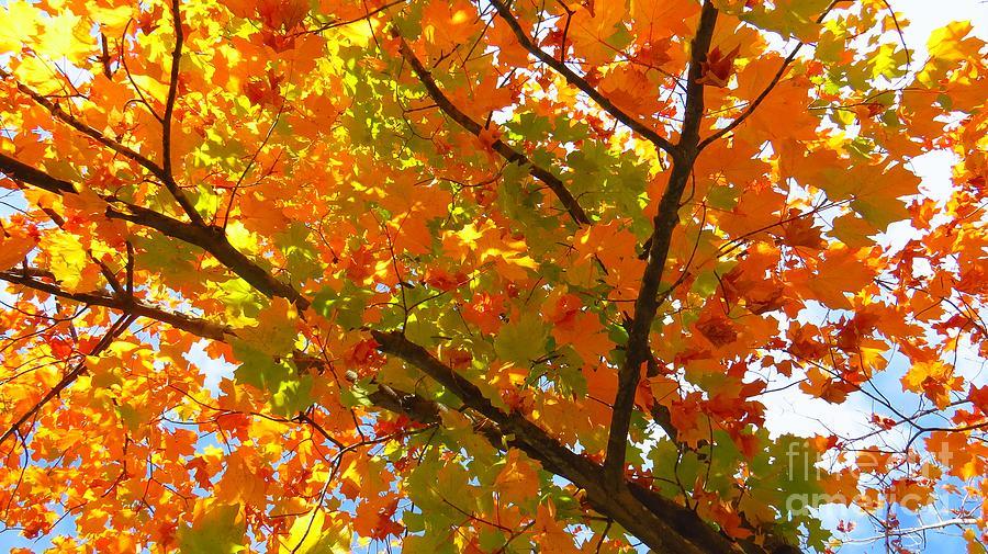 Autumn Leaves Photograph - Season Of Change by Scott Cameron