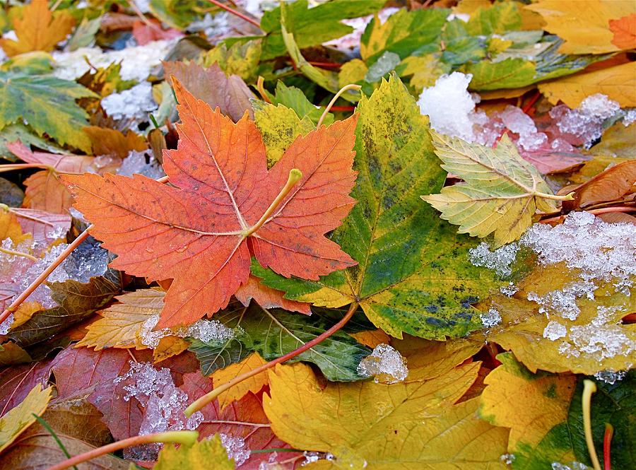 Leaves Photograph - Seasonal Mix by Rona Black