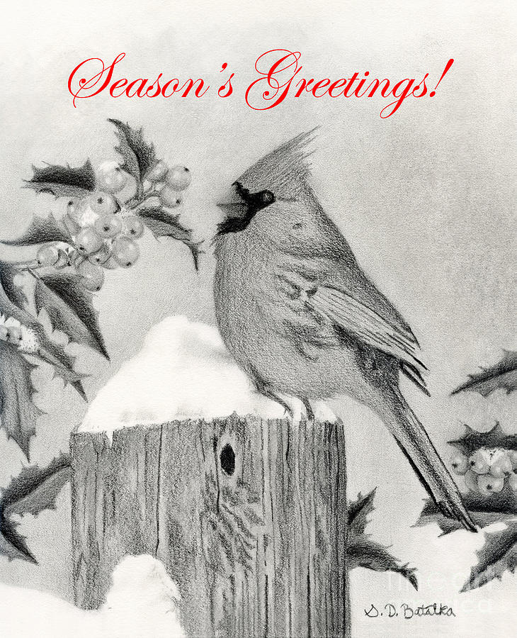 Christmas Drawing - Cardinal And Holly- Seasons Greetings Cards by Sarah Batalka