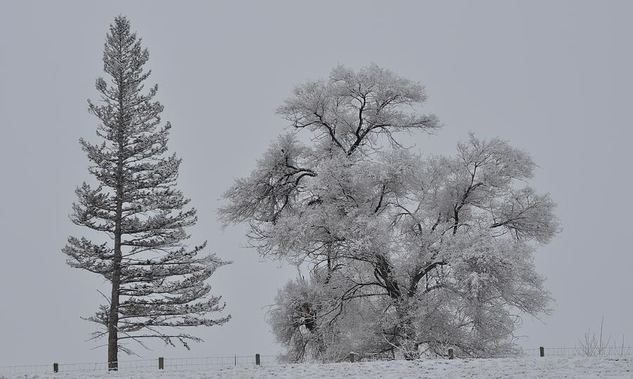 Seasons in the Snow by Mike Helland