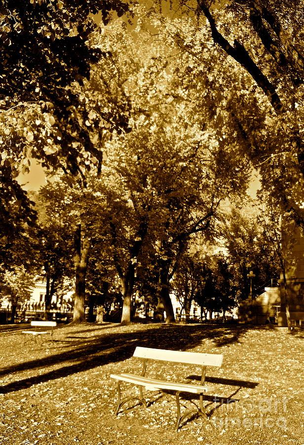 Trees Photograph - Seasons Of Life by Monico Art