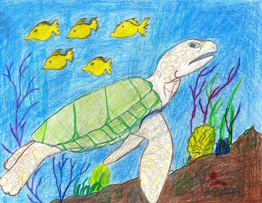 Sea Turtle Drawing - Seaturtle Swimming The Reef by Fred Hanna