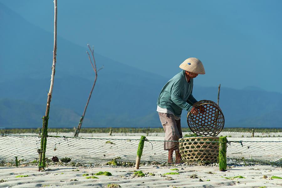 Seaweed Farmer On Nusa Lembongan, Bali Photograph by Dallas Stribley