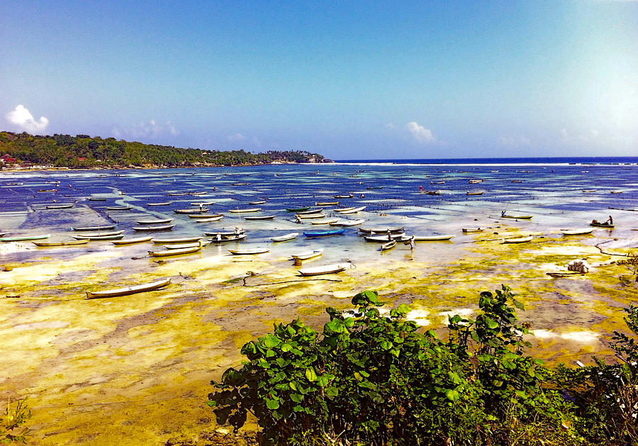 Nature Photograph - Seaweed Farming Bali by Jo Ann
