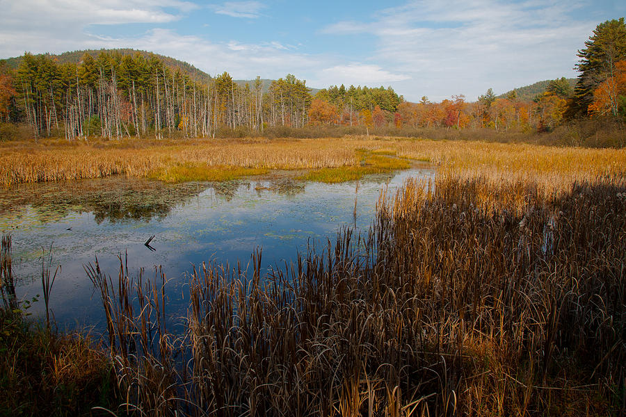 Adirondack's Photograph - Secluded Adirondack Pond by David Patterson