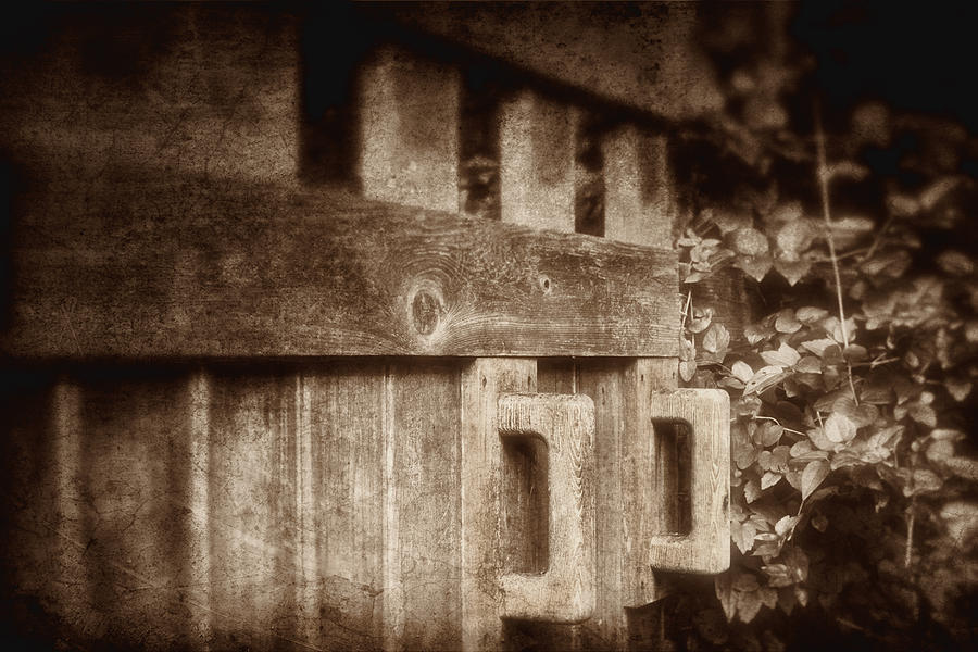 Brown Photograph - Secluded Garden by Tom Mc Nemar
