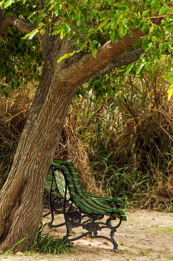 Tree Photograph - Secluded Park Benches by Jess Kraft