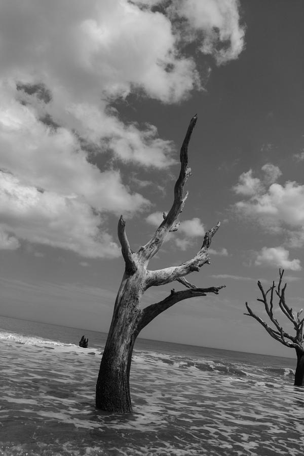 Hunting Island Photograph - Second Glance by Steven  Taylor
