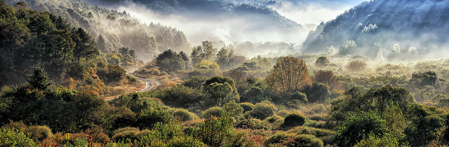 Forest Photograph - Secret Gargen by Tiger Seo