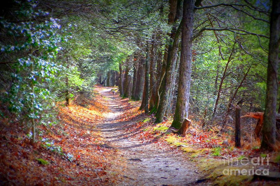 Secret Pathway 1 by Cynthia Mask