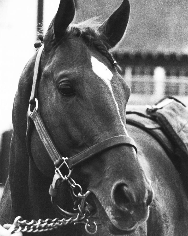 Classic Photograph - Secretariat Vintage Horse Racing #02 by Retro Images Archive