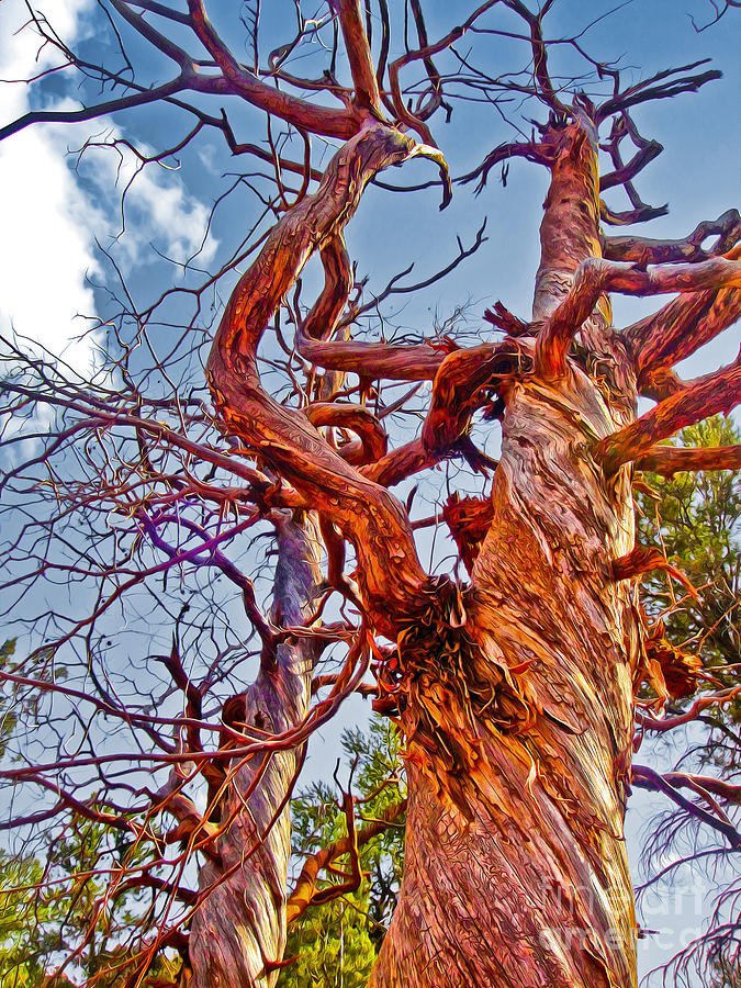 Sedona Arizona Photograph - Sedona Arizona Ghost Tree by Gregory Dyer