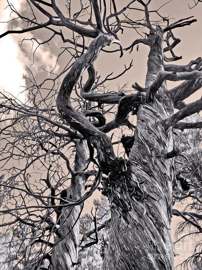 Sedona Arizona Photograph - Sedona Arizona Ghost Tree In Black And White by Gregory Dyer