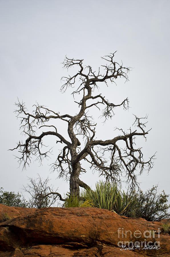 Sedona Photograph - Sedona Landscape Vii by Dave Gordon