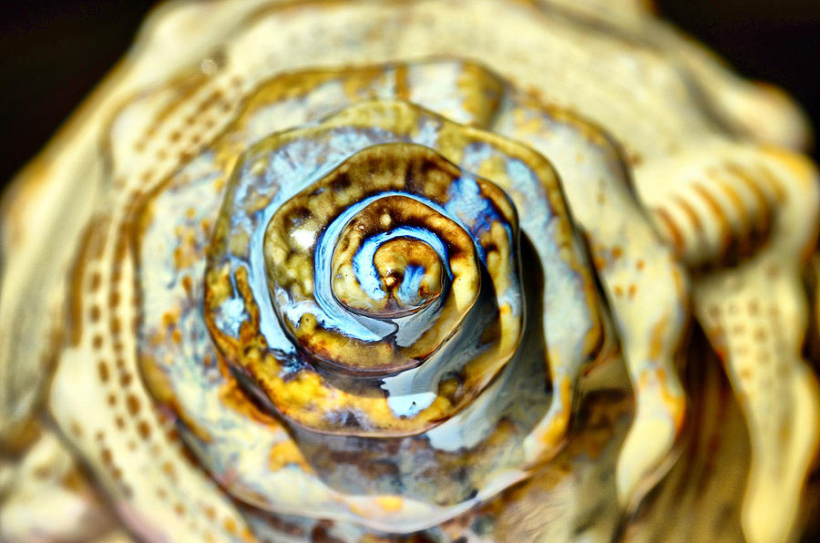 2013 Pyrography - See Shell by Alberto Lama