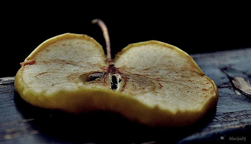 Nature Photograph - Seed by Marija Djedovic
