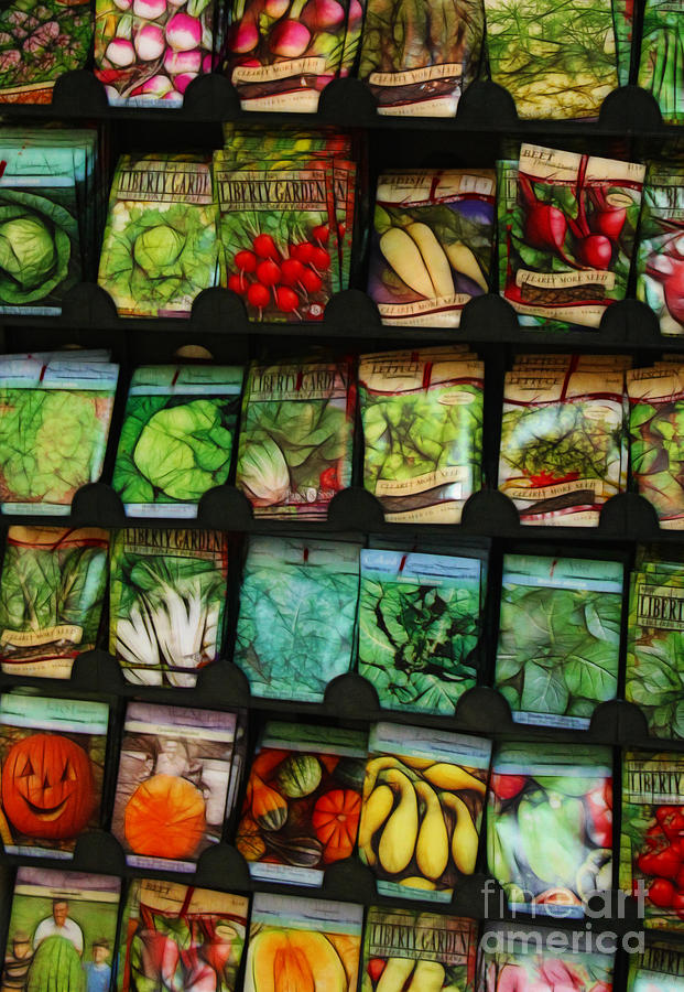 Seed Photograph - Seed Packets by Judi Bagwell