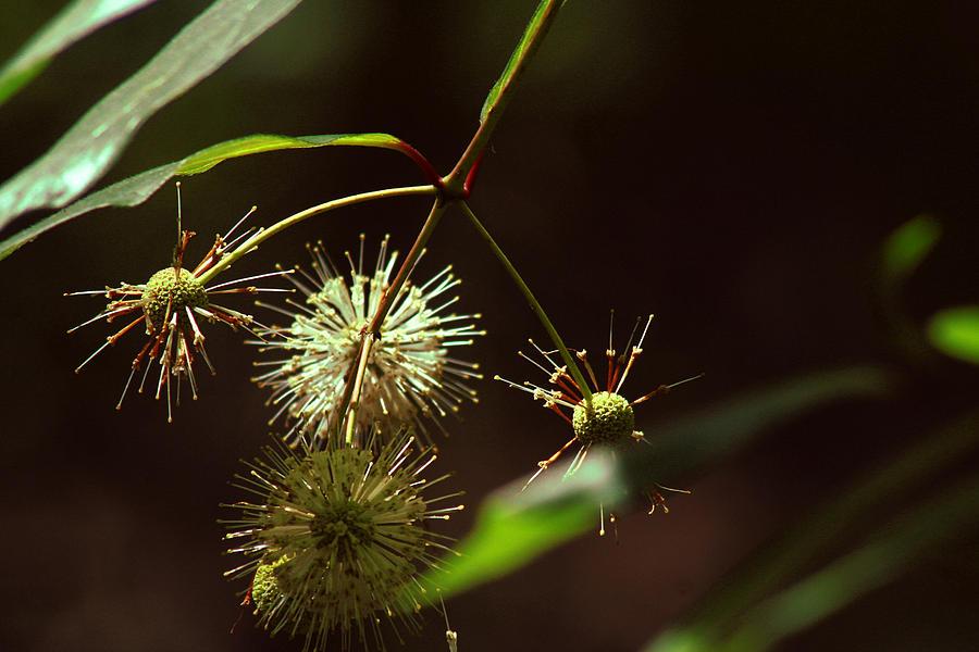 Seeds Photograph - Seeding Peace by Sean Green