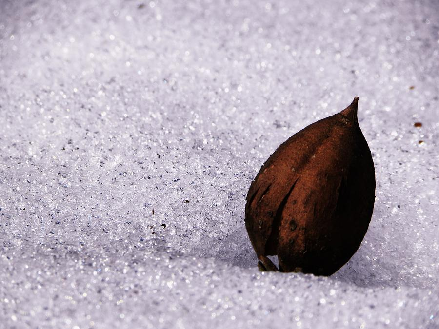 Snow Photograph - Seedling by Christian Rooney