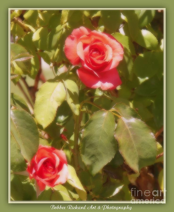 Rose Photograph - Seeing Double by Bobbee Rickard