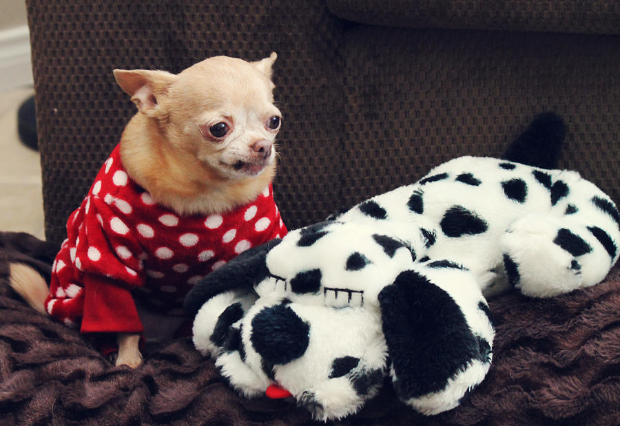 Dogs Photograph - Seeing Spots by Laurie Search