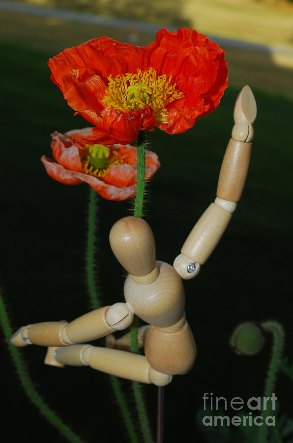Wood Photograph - Seeking A Yellow Brick Road Number One Poppy  by Heather Kirk