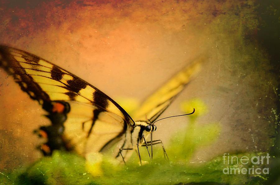 Butterfly Photograph - Seeking Sweetness 3 by Lois Bryan
