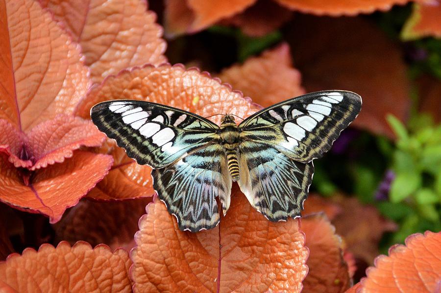 Butterfly Photograph - Self by David Earl Johnson