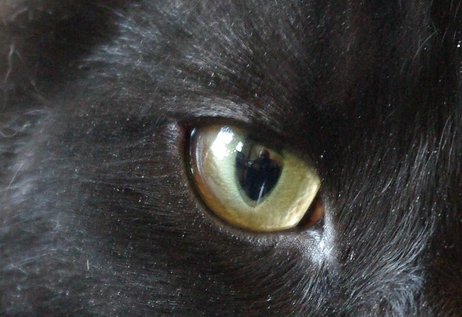 Cats Eye Photograph - Self Portrait by Keith Nichols