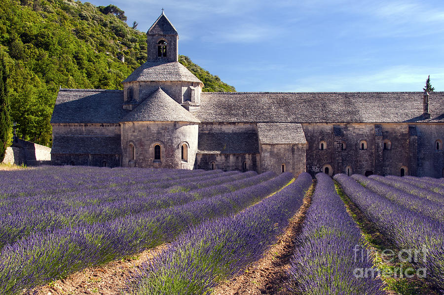Sénanque Abbey Photograph - Senanque Abbey by Bob Phillips