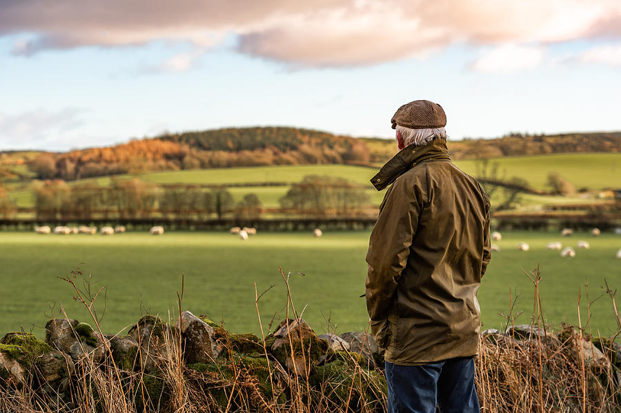 Senior man looking at field with sheep Photograph by JohnFScott