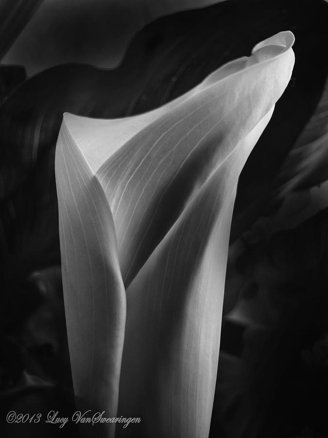 Calla Photograph - Sensuous Calla by Lucy VanSwearingen
