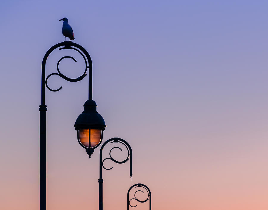 Sunset Photograph - Sentinel At Sunset by Steve Stanger