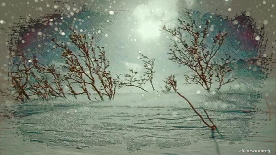 Winter Photograph - Sentries by Ellen Cannon
