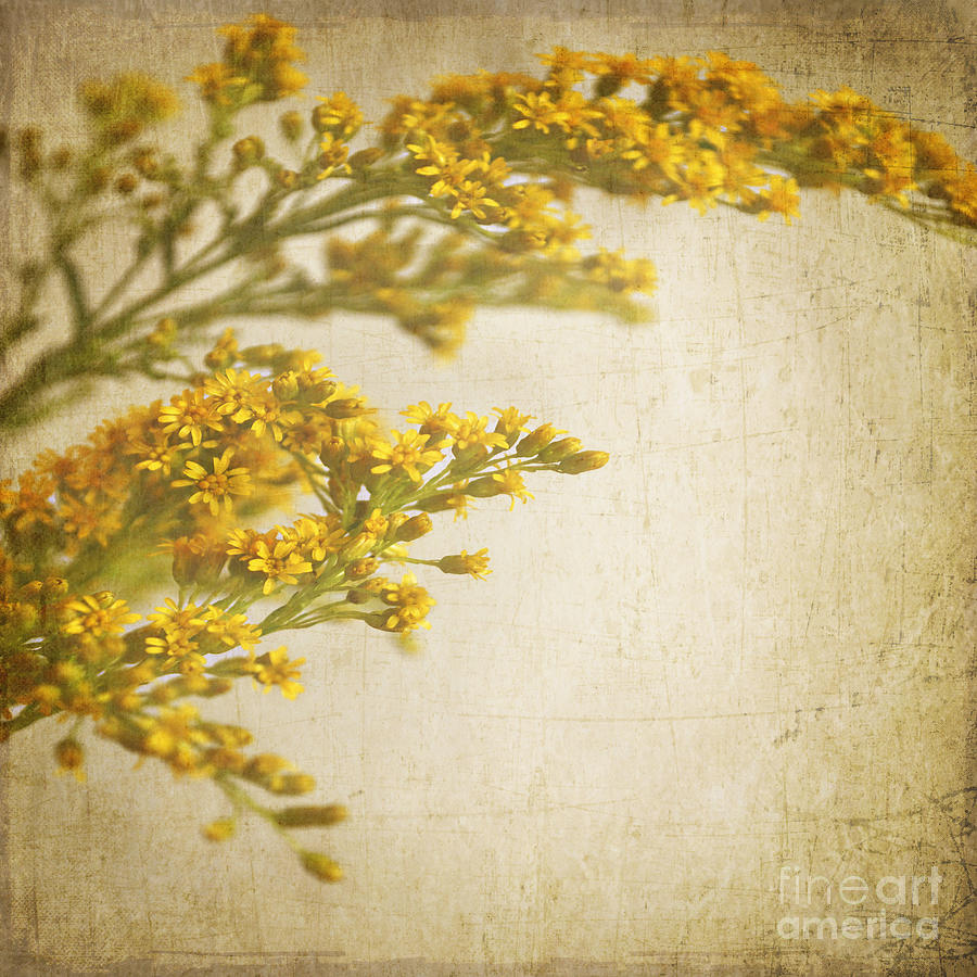 Flower Photograph - Sepia Gold by Lyn Randle