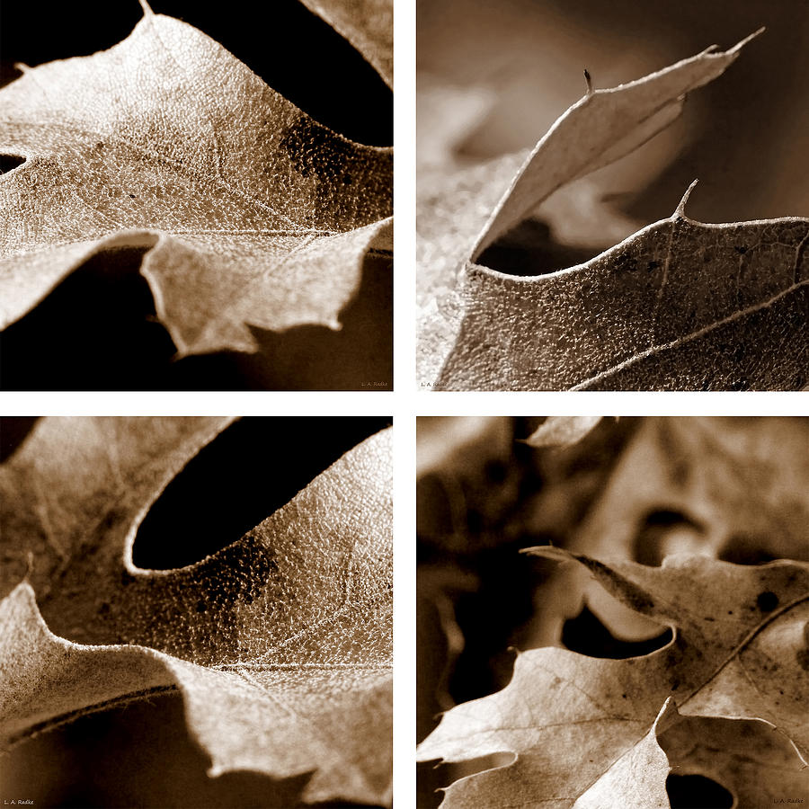 Sepia Leaf Collage by Lauren Radke