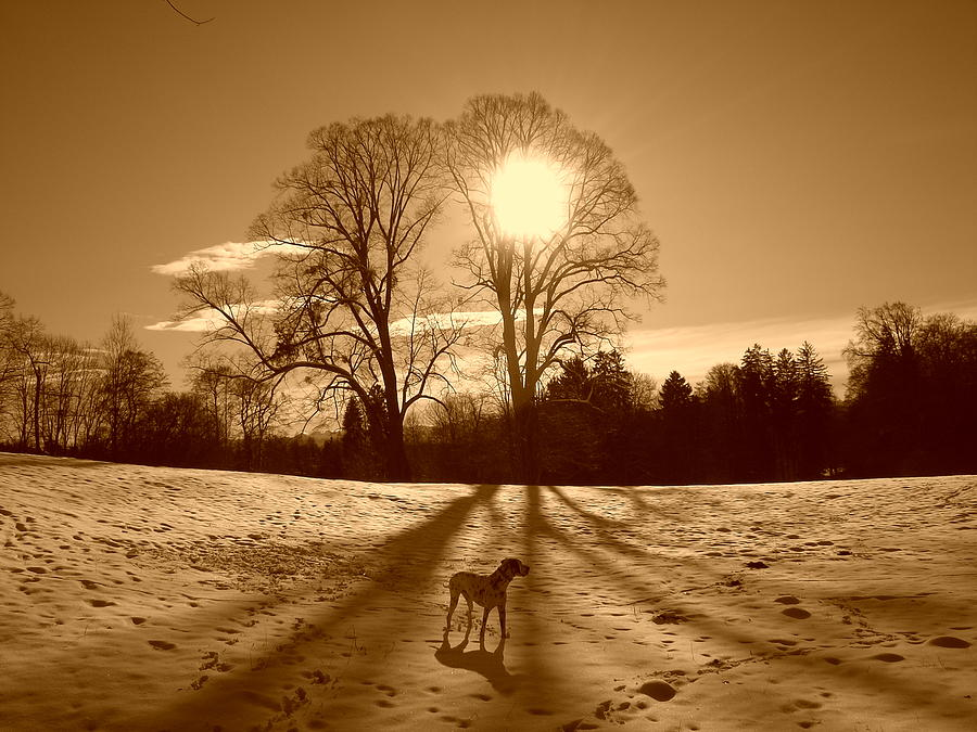 Landscape Photograph - Sepia Sunrise by The Creative Minds Art and Photography