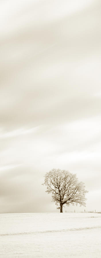 Autumn Photograph - Sepia Triptych Tree 13-0747 Set 1 Of 3 by U Schade