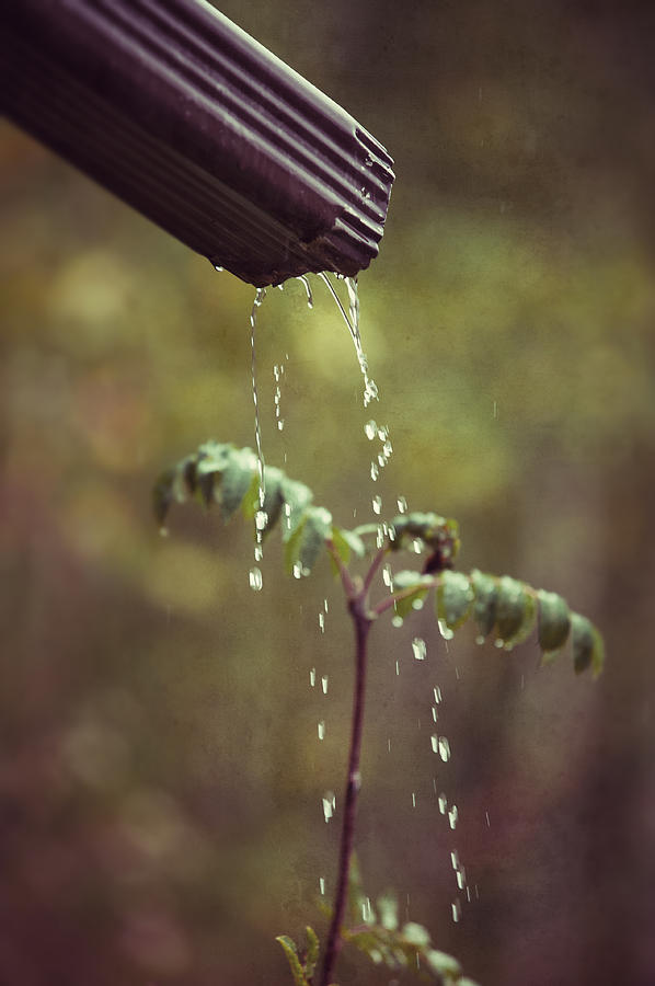 Drain Pipe Photograph - September In The Rain by Ari Salmela