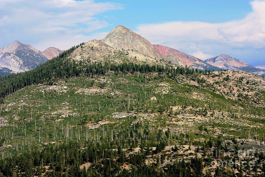 National Park Photograph - Sequoi National Park by Sophie Vigneault