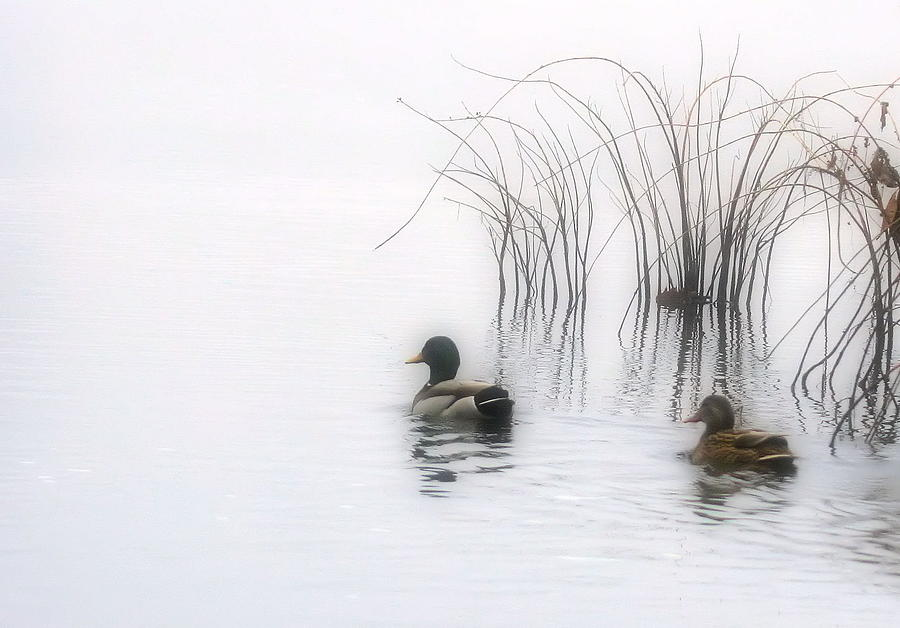 Ducks Photograph - Serene Moments by Karol Livote