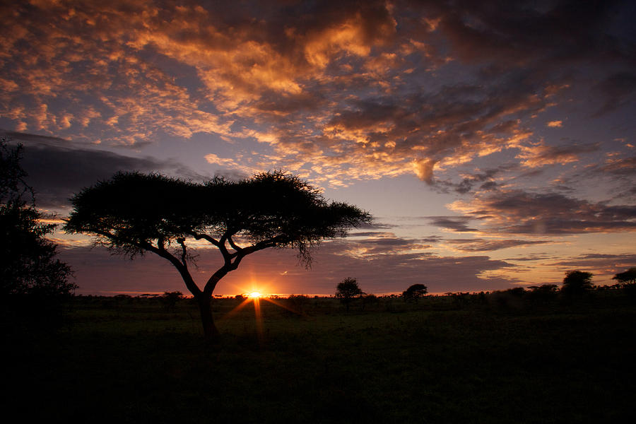 Sunrise Photograph - Serengeti Sunrise by Michael Underhill