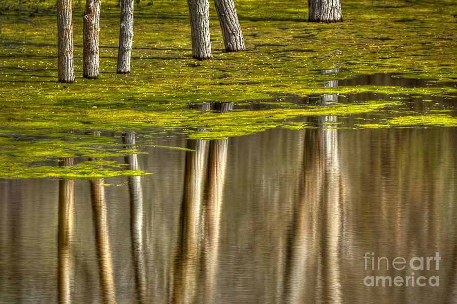 Reflection Photograph - Serenity by Alice Cahill
