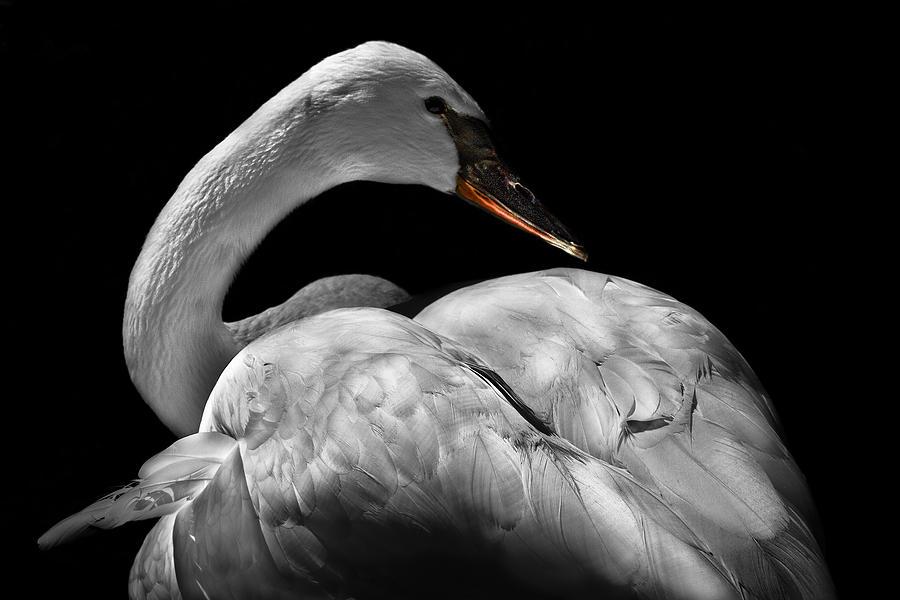 Animals Photograph - Serenity by Debra and Dave Vanderlaan