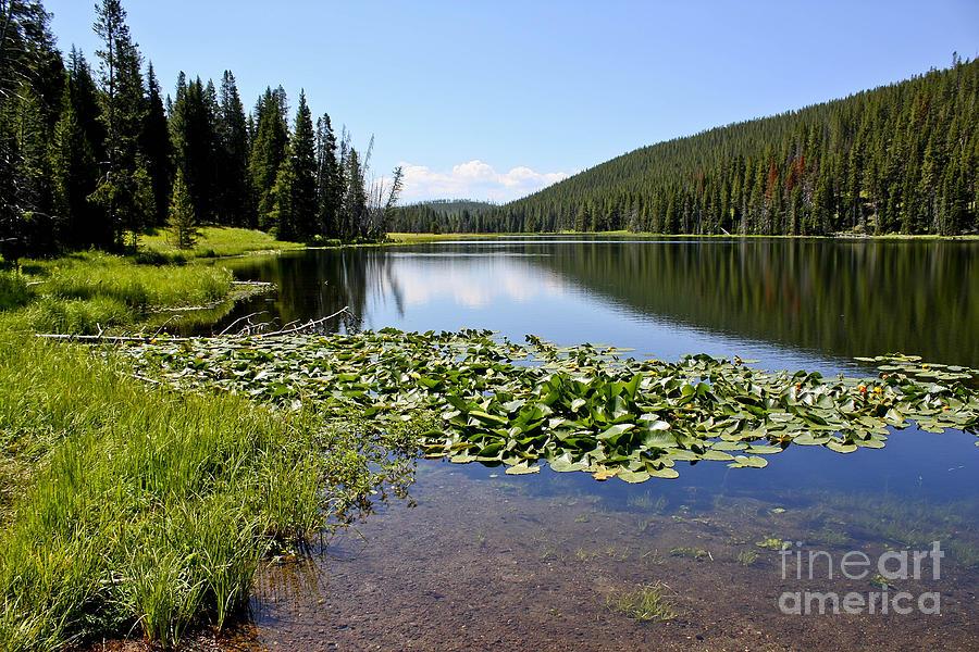 Lake Photograph - Serenity In Yellowstone by Teresa Zieba