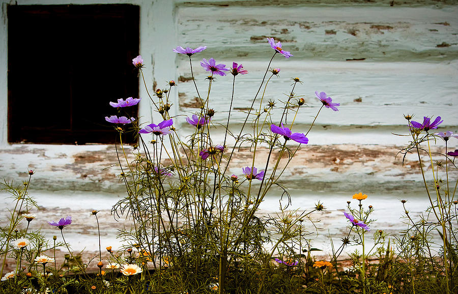 Wild Flowers Photograph - Serenity by Joanna Madloch