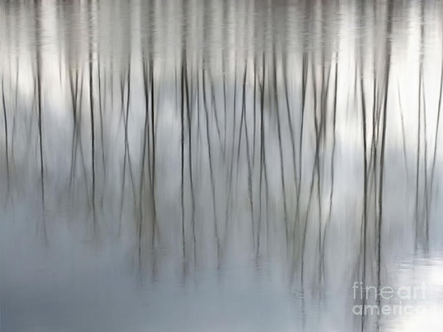 Serenity  by Michelle Twohig
