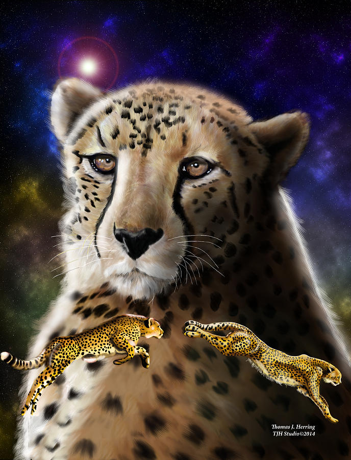 First in the Big Cat Series - Cheetah by Thomas J Herring