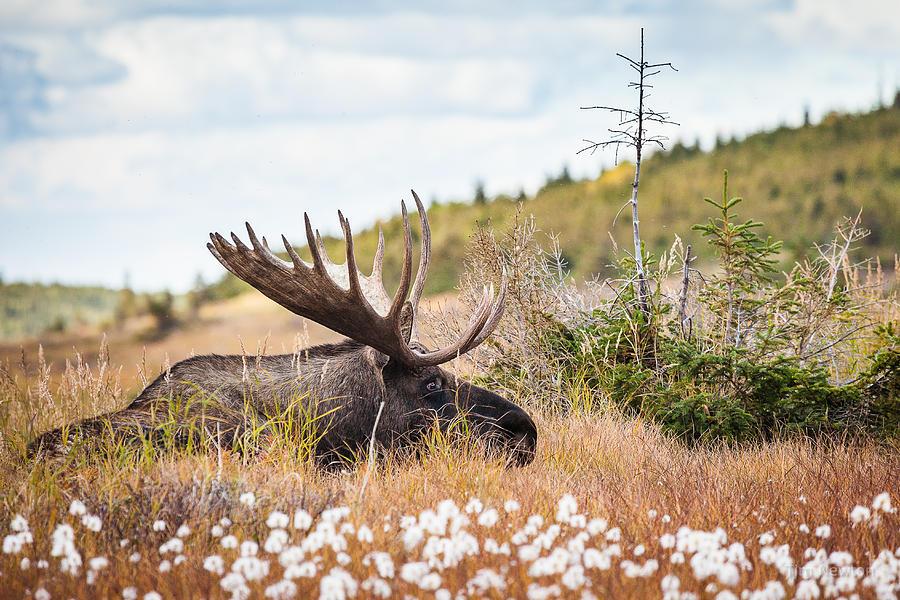 Alaska Photograph - Serious Lady-Watching by Tim Newton