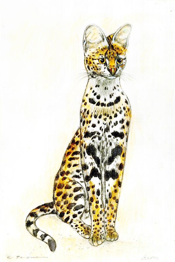 Serval Drawing - Serval by Kurt Tessmann